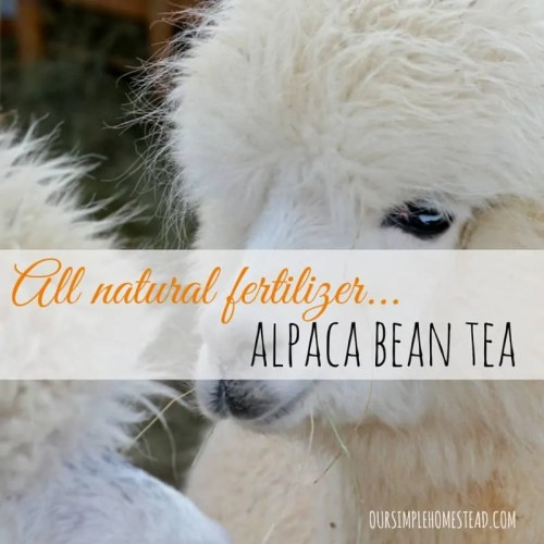 Alpaca Bean Tea - All Natural Fertilizer