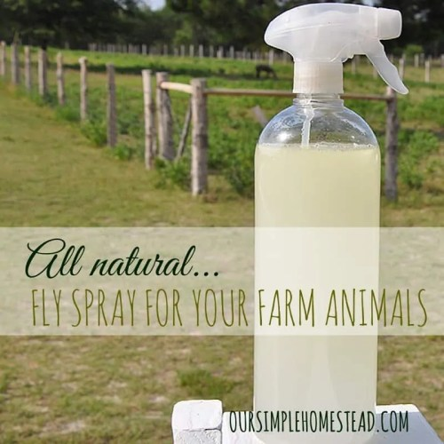 All Natural Fly Spray for Farm Animals