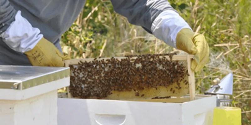 beginner-bee-keeper