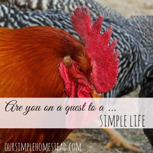 Are you on a quest for a simple life?