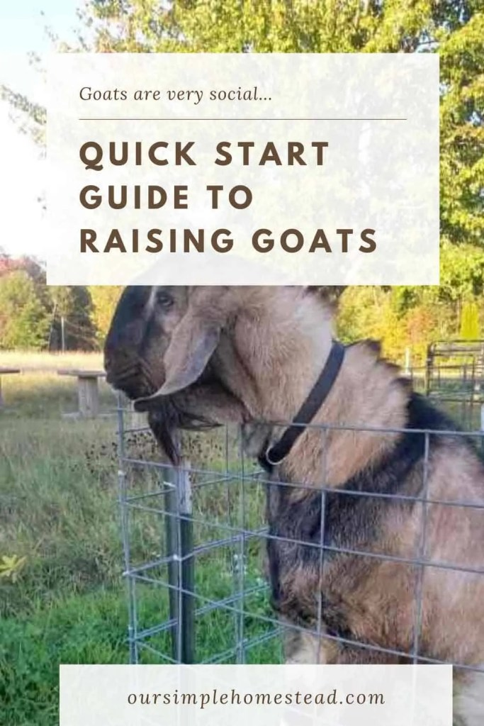 quick start guide to goats