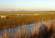RSPB Cliffe Pools Feb 3rd 2011 008