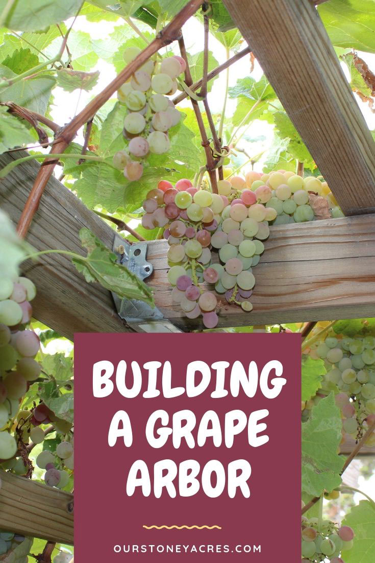Building A Grape Arbor In Your Backyard Garden Our Stoney Acres