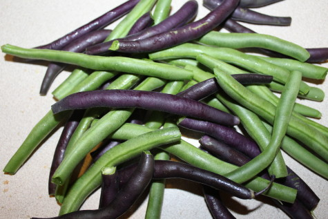 Freezing Green Beans - Our Stoney Acres