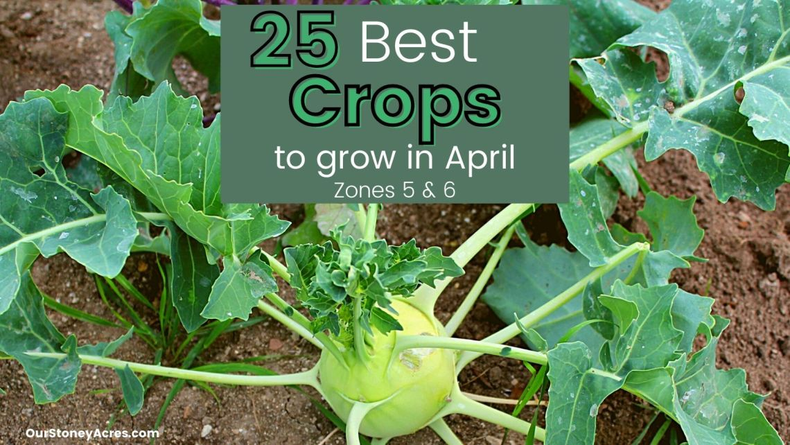 April Planting Guide Zones 5 6 Our Stoney Acres
