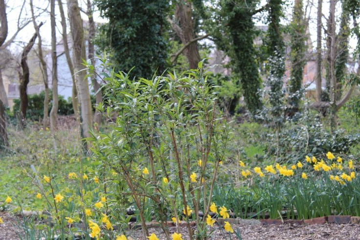 Birkby Community Wildlife Garden