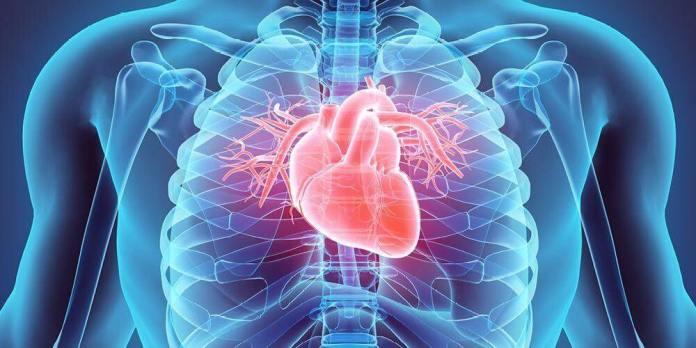 manfaat kepiting untuk menyehatkan jantung