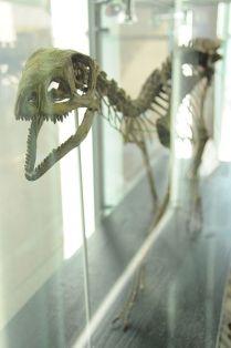 Silesaurus_szkielet2