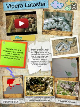 http://enciso.edu.glogster.com/vipera-latastei