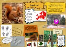 http://annulla.edu.glogster.com/squirrel-wiewiorka