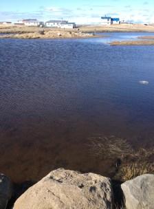 A pond in Innri Njarðvík.