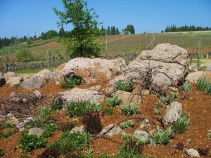 Volcanic rocks found on the winery property