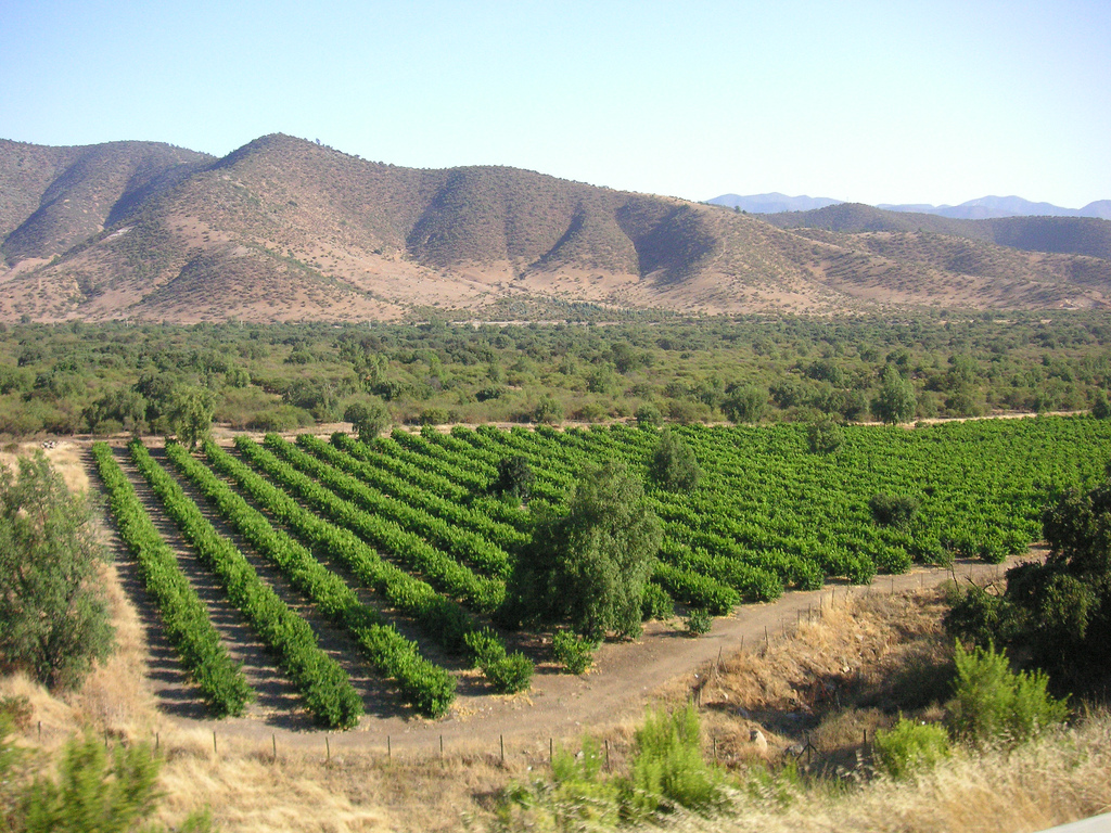 Vineyards in the Andes Mountains