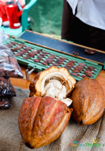 Cacao Pods -- what makes the great chocolate in Belize! Photo courtesy of My Beautiful Belize