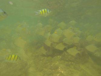 vissen2