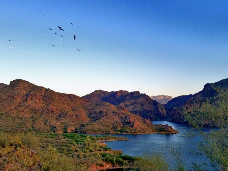 Hiking Butcher Jones Trail  - birds soaring over Burro Cove,  Saguaro Lake,  Arizona