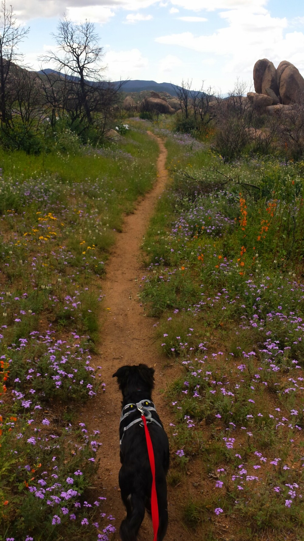 Wildflowers put on a spectacular display of color along the trail