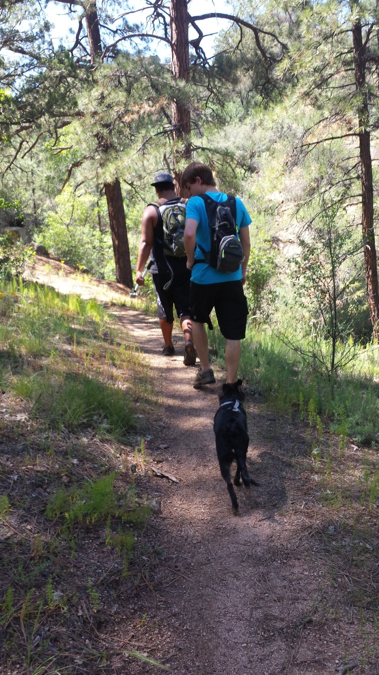 Little Granite Mountain Trail winds uphill through pine forest