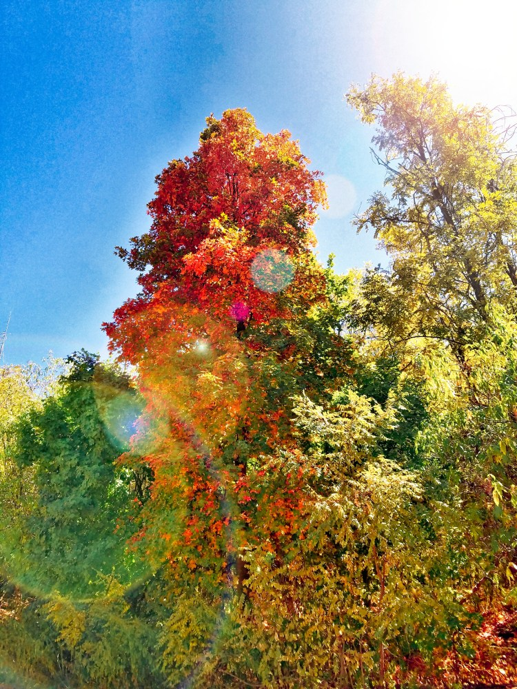 Colors change along FR 33 with vibrant red, orange and yellow leaves lining the road to the creek