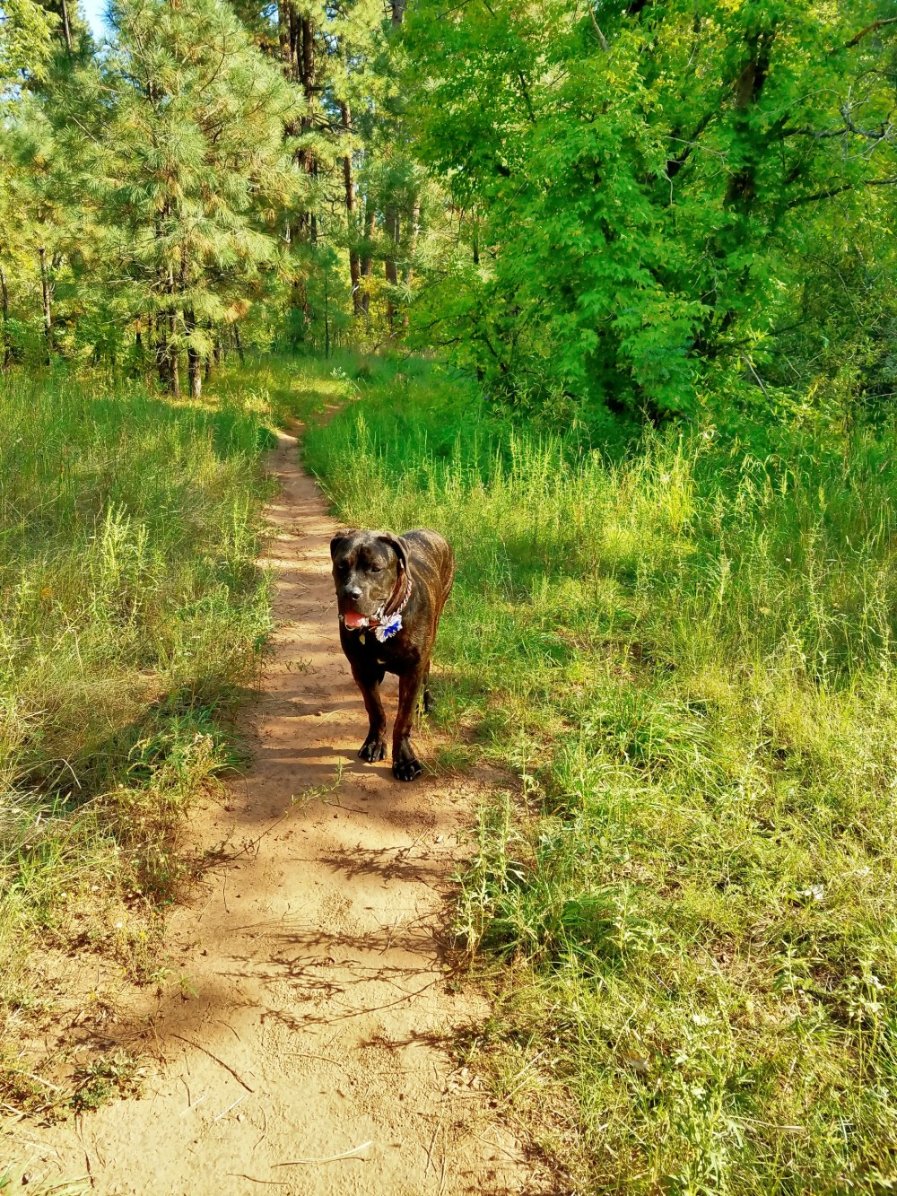 Daisy takes to the trail ready for some play time in the creek