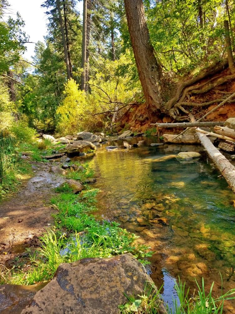 Falling leaves make their way down stream