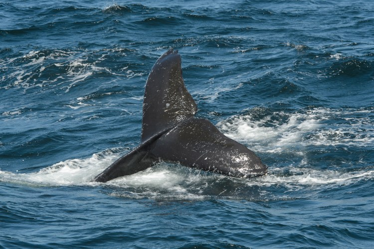 Mtry_Whale_Watching_Troutman_Full_Rights_36.jpg