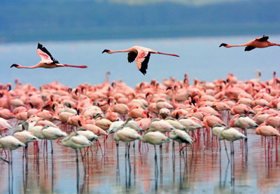 mexico_los-flamingos