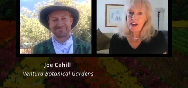 Joe Cahill, Ventura Botanical Gardens