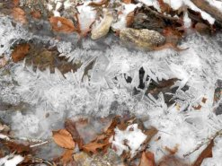 Interesting ice formations were in the streams by the trails.