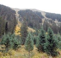 Mountainsides showed where slides and avalanches occur.