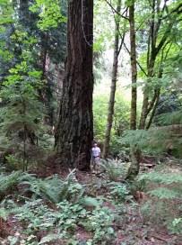 Wonderful tall trees