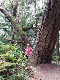 More big trees