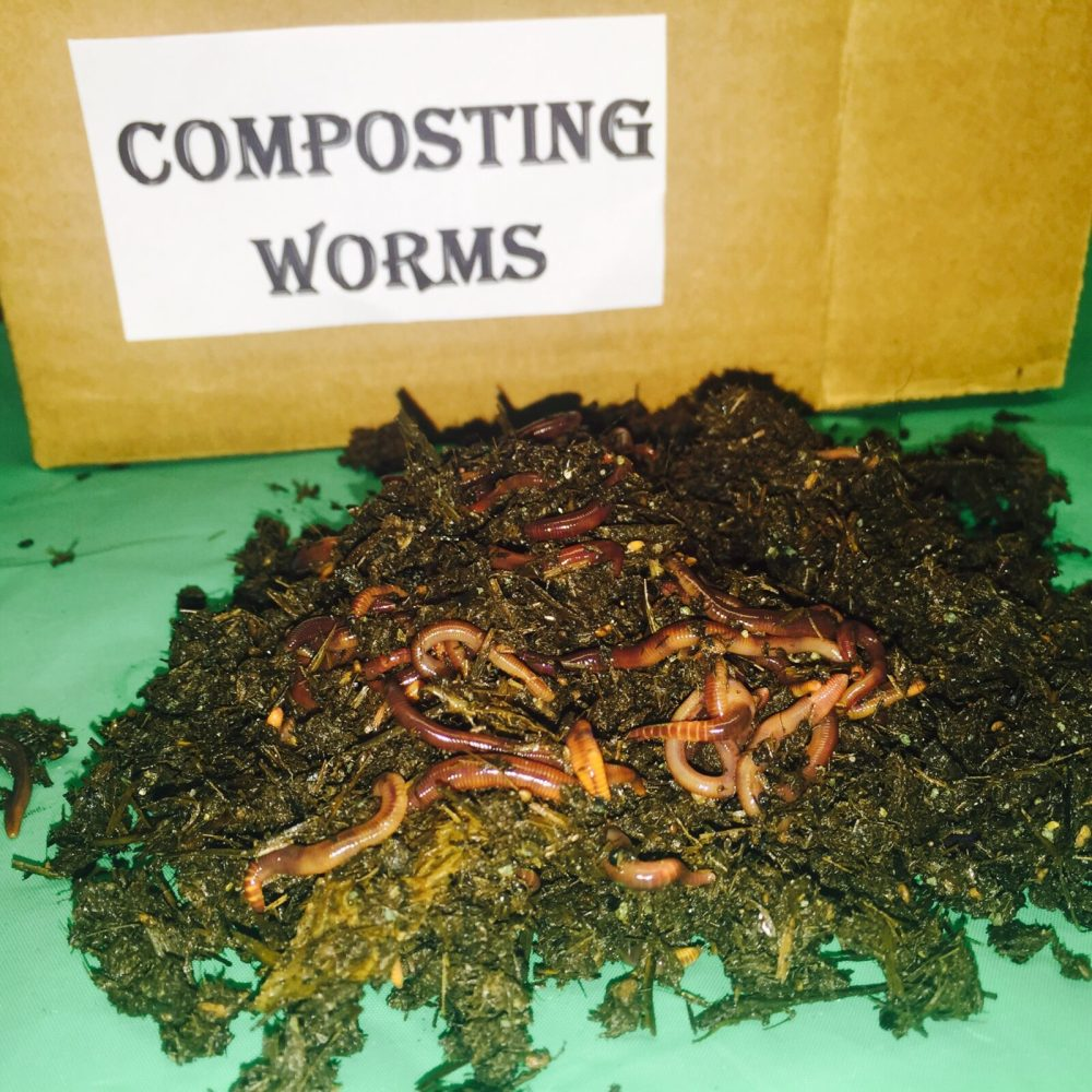 Vermicomposting | Our Vital Earth, Inc. | Home of the Wonder Worm ...