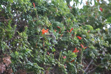 The hummingbird loves it here!