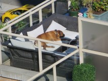 This dog has the life!