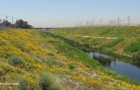 Dominguez Gap Wetlands: Connecting Community to the Environment