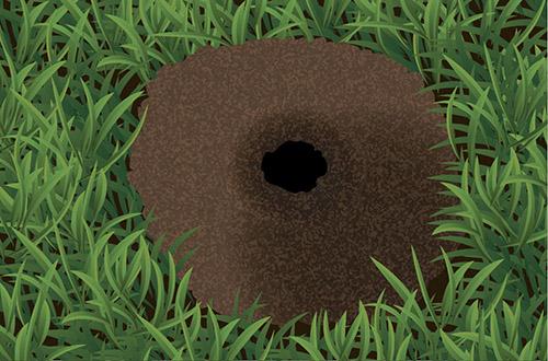 Mole mound illustration