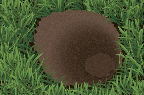 Pocket gopher mound