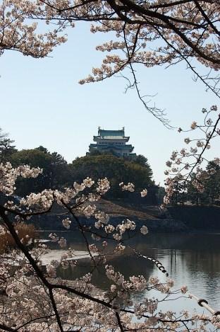 April-Hanami, Nagoya