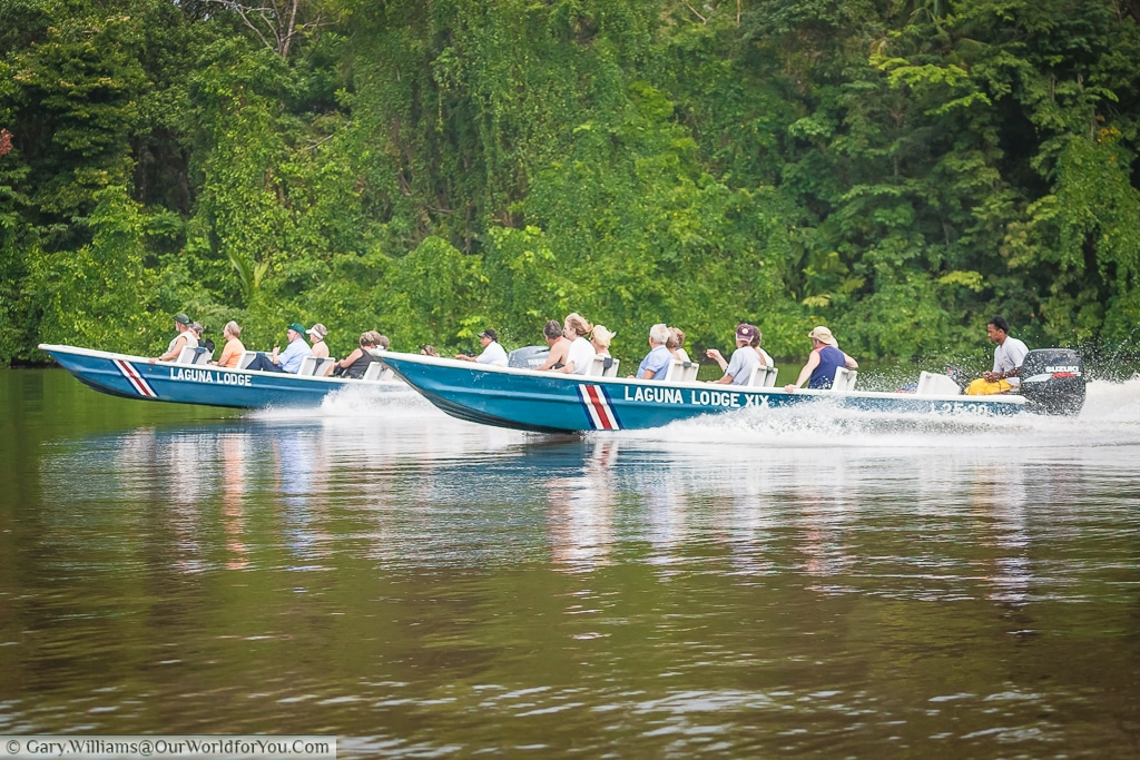 The launches used by Laguna Lodge to take the tourists out on there trips., Tortuguero, Costa Rica