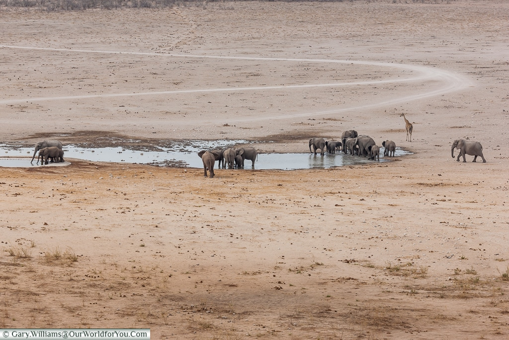 Elephants at the watering hole, Etosha National Park, Namibia