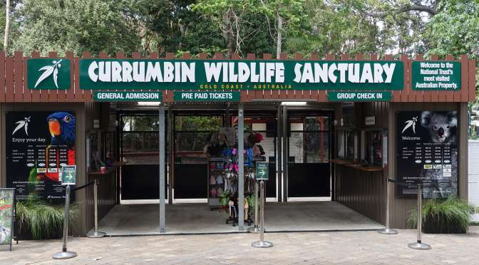Currumbin Wildlife Sanctuary – A Gold Coast Must-See
