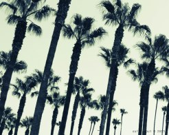 Palm trees are synonymous with California. These ones stand tall outside Union Station, Los Angeles.