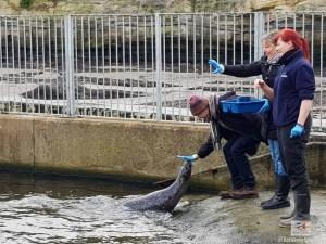 St. Andrews Aquarium Harbour Seal Feeding