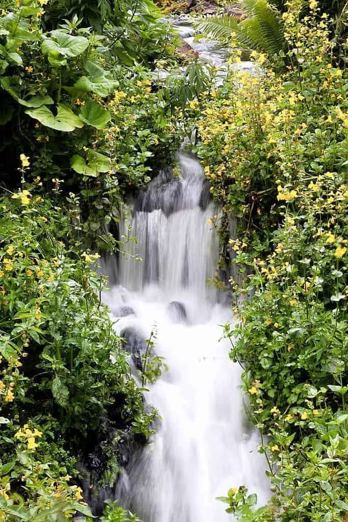 Edinburgh Botanic Gardens (14 of 16)