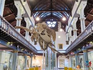 The Hunterian Museum (10 of 17)