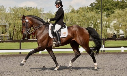 Newly approved AES stallion struts his stuff