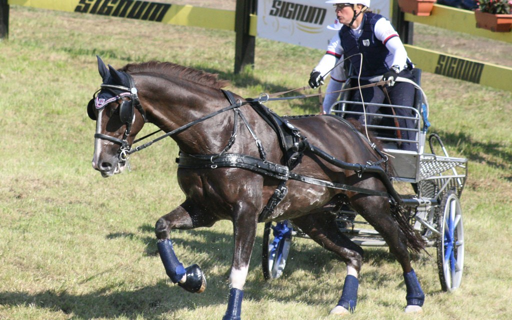 Driving trials to ridden dressage horse says it's All Right!
