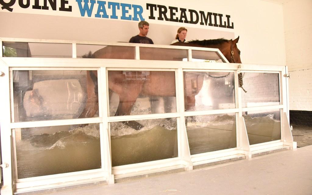 Jody Haswell backs treadmill training and therapy