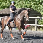 Leanne's Basics, part 1 — Counter-canter